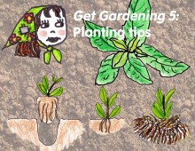 Frannie's gardening guide, part five: planting tips